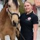 Heste wellness fyn