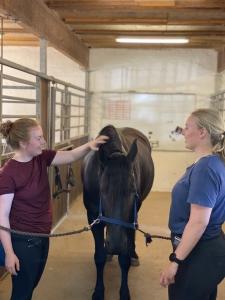 Hestebehandling