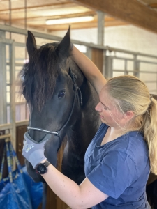 Fysioterapi hest
