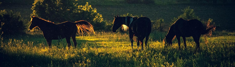 Heste harmoni