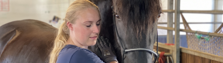 Behandler hest