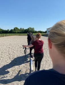Heste træner