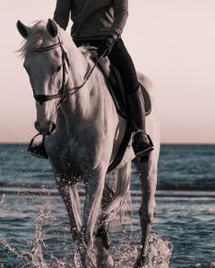 Hestefysioterapeut Fyn