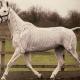 Hesten skelet