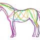 Hestens bindevæv
